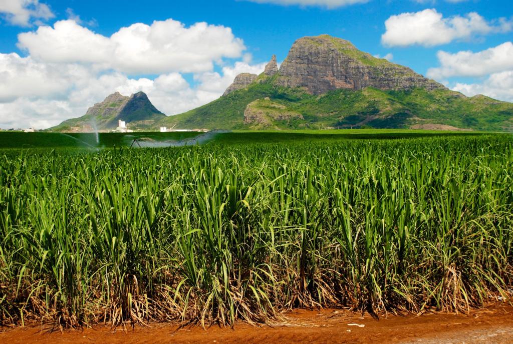 Natuur Mauritius 2, suikerriet, strand, huwelijksreis, zon - Dit zijn de mooiste huwelijksreisbestemmingen in Afrika