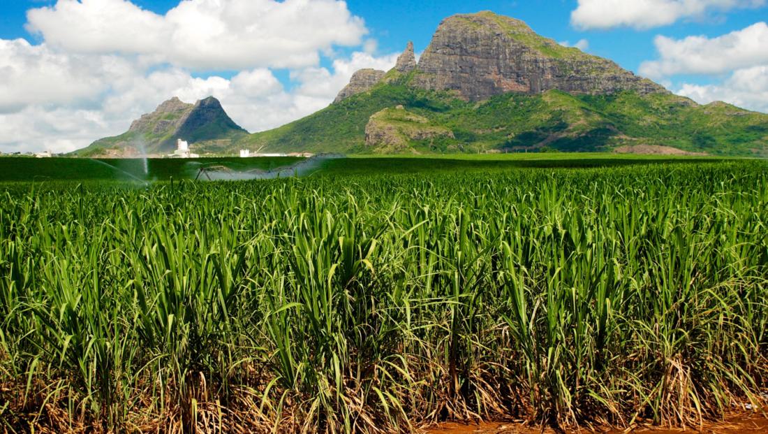 Natuur Mauritius 2