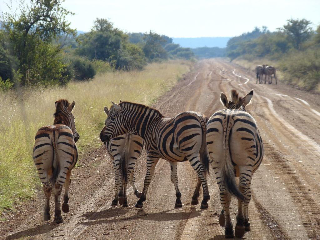 Madikwe Game Reserve (10)