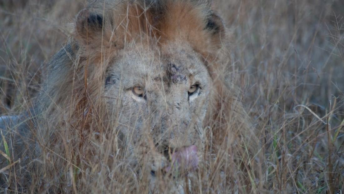 Madikwe Game Reserve (3)