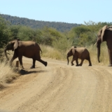 Madikwe Game Reserve (8)