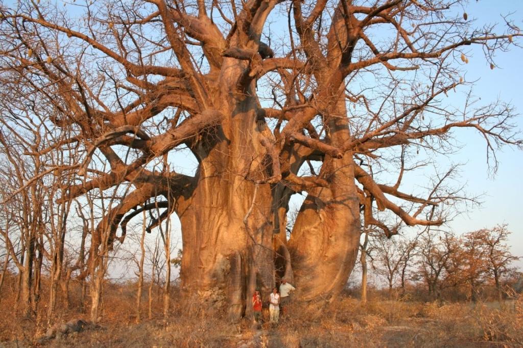 Combinatie vakantie Afrika, dit zijn de mogelijkheden - Baobab, kinderen, reizen met kinderen