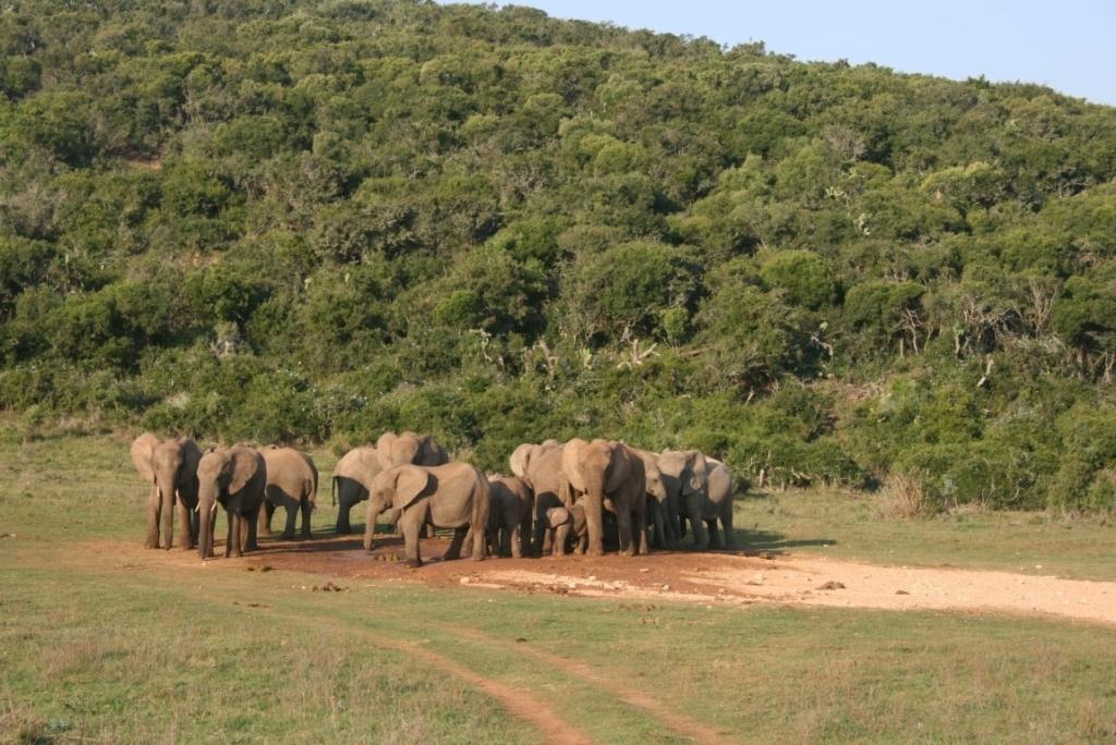 Addo Elephant National Park (1)