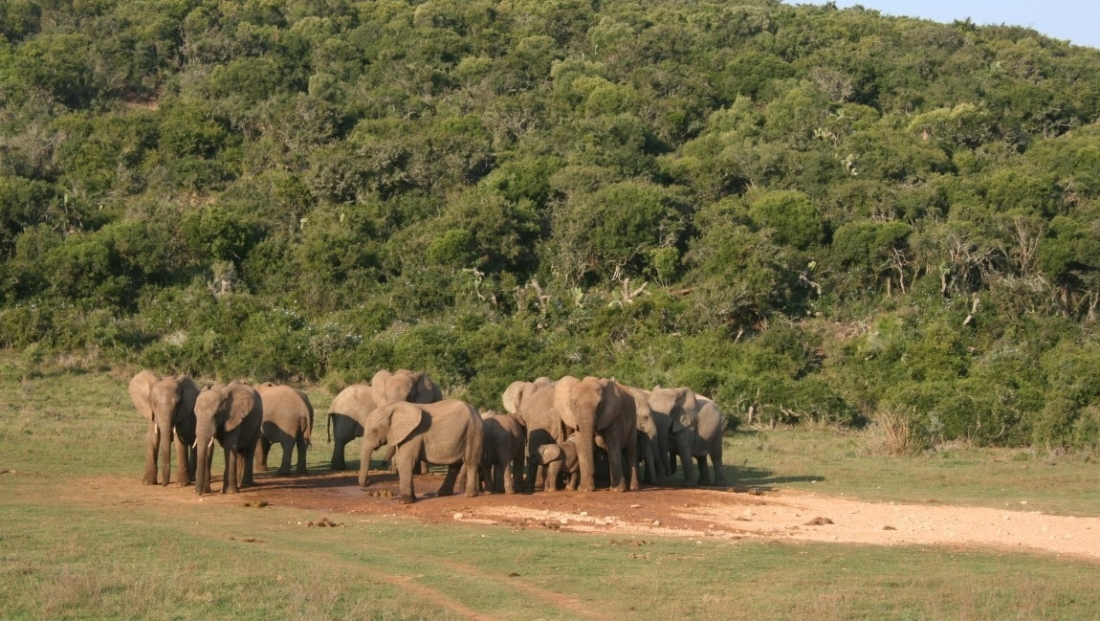 Addo Elephant National Park (1)