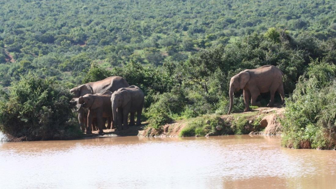 Addo Elephant National Park - olifanten bij drinkplaats
