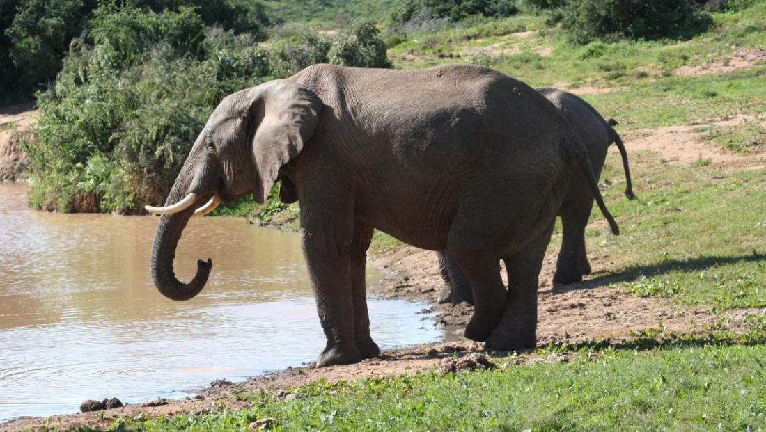 Addo Elephant National Park (13)