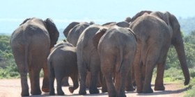 Addo Elephant National Park (7)