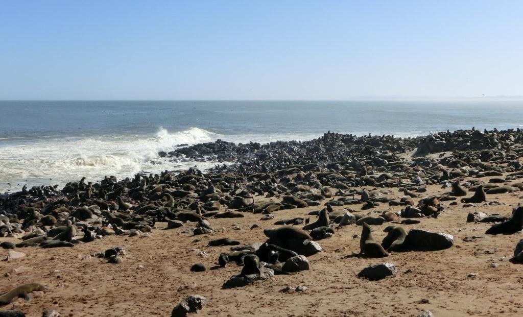 Cape Cross - Pelsrobben strand oceaan