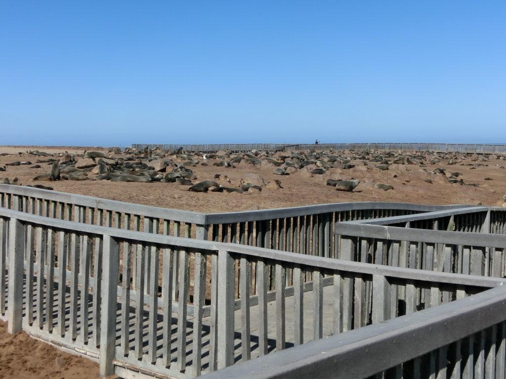 Rondreizen Namibië - Bezoek Cape Cross, ten noorden van Swakopmund.