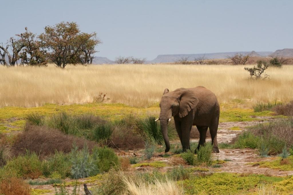 Nieuwsbrief Out in Africa - Namibië Anders, Damaraland, woestijnolifanten
