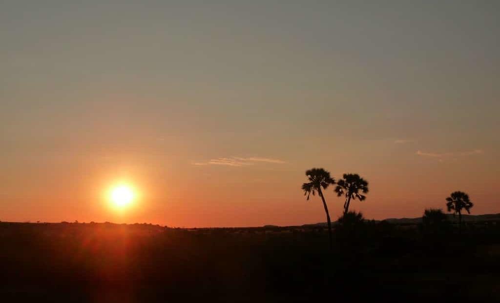 Damaraland - Zonsondergang met palmbomen