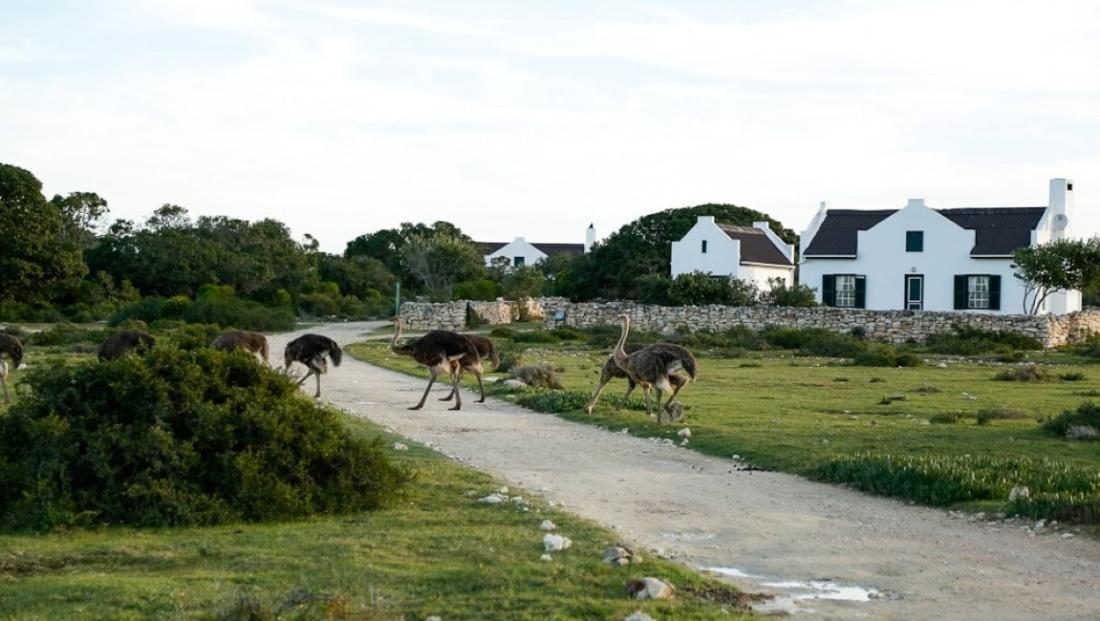 De Hoop Nature Reserve - struisvogels