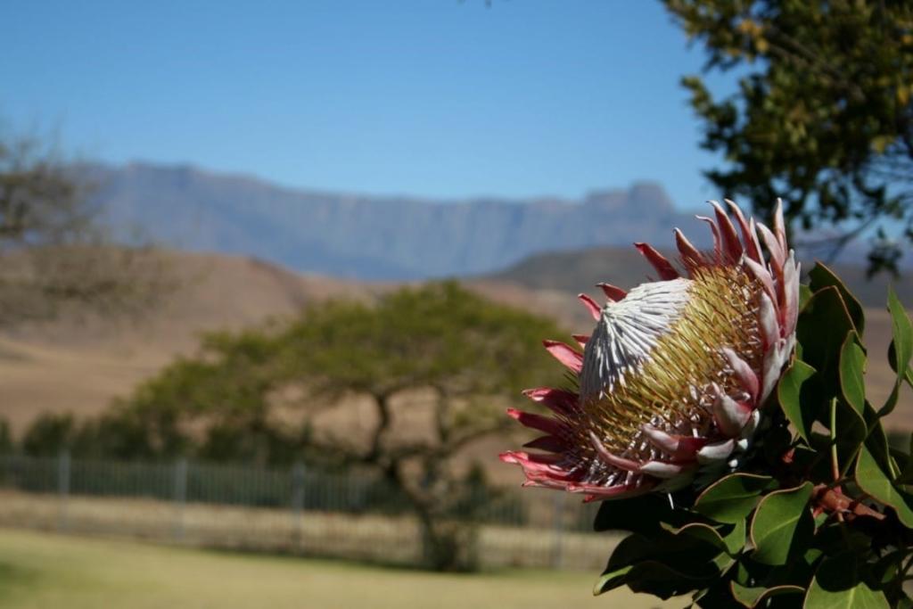 Natuur, Drakensbergen, Zuid-Afrika - Een individuele rondreis in Zuid-Afrika, dit zijn de opties!