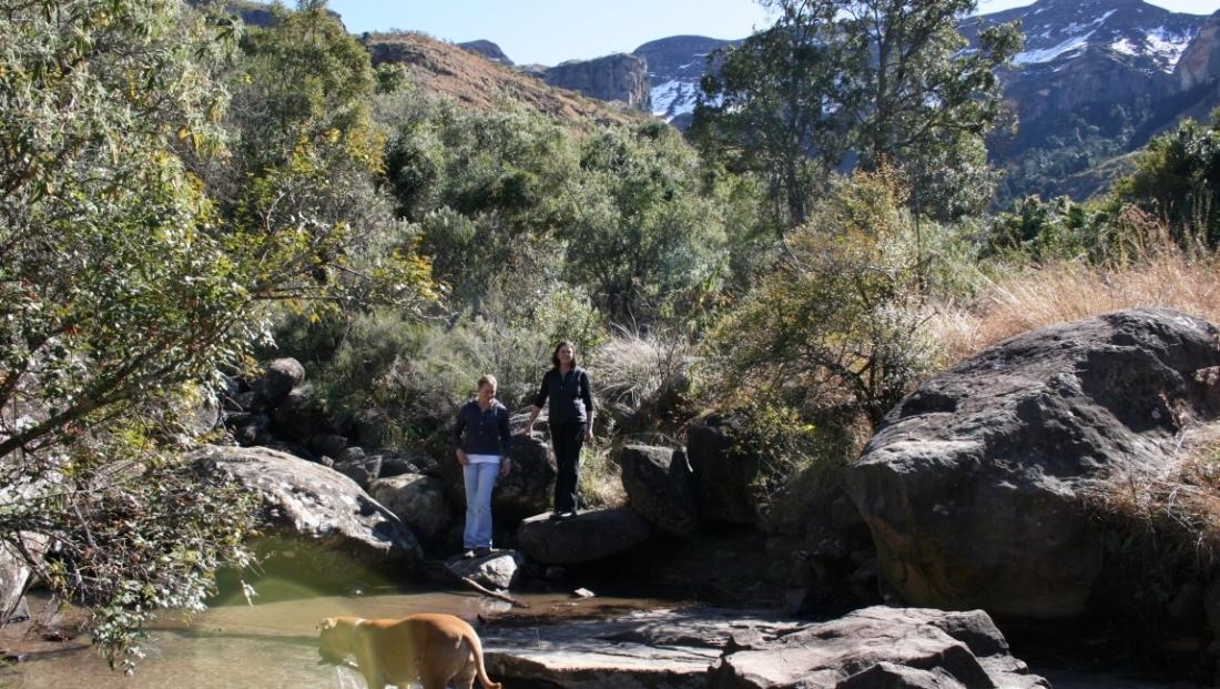 Drakensbergen - wandelen met de hond