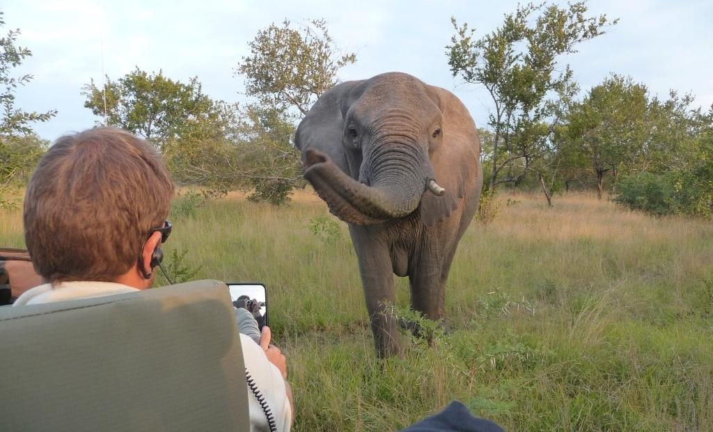 Elephant Plains - olifant - privé safari