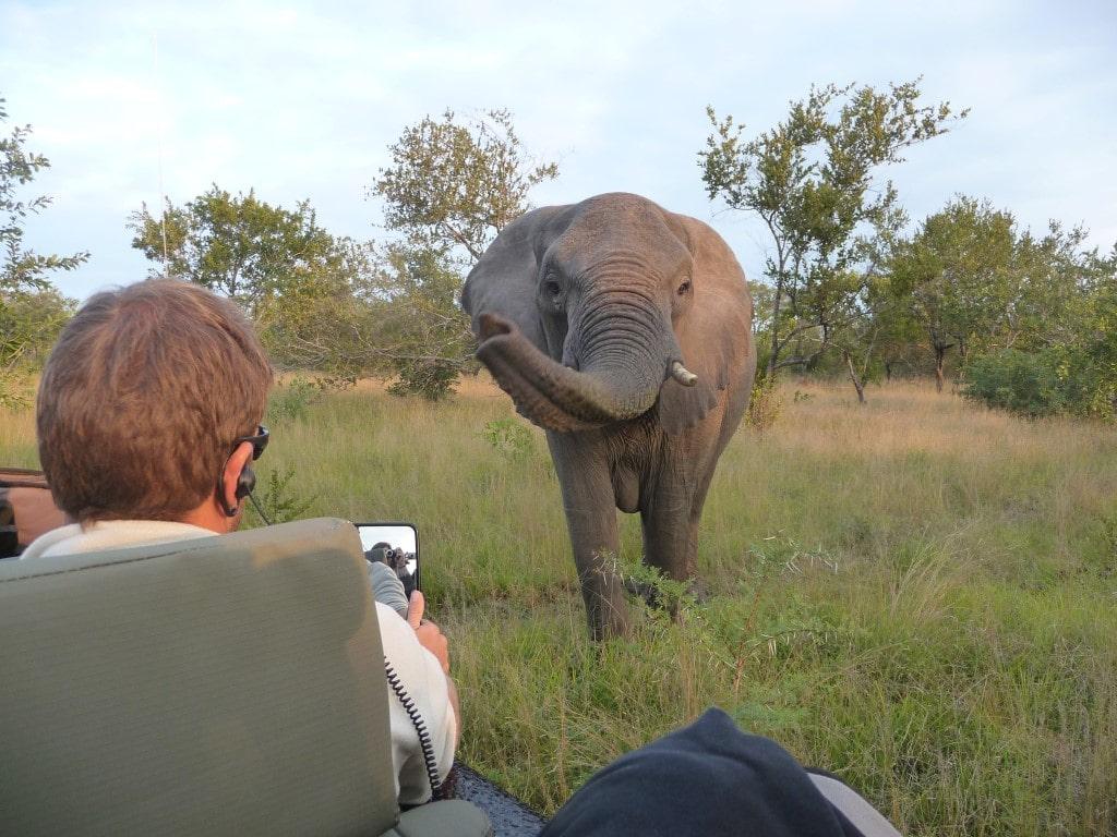 Huwelijksreizen Zuid-Afrika: Oog in oog met de Big 5 tijdens een privé safari.