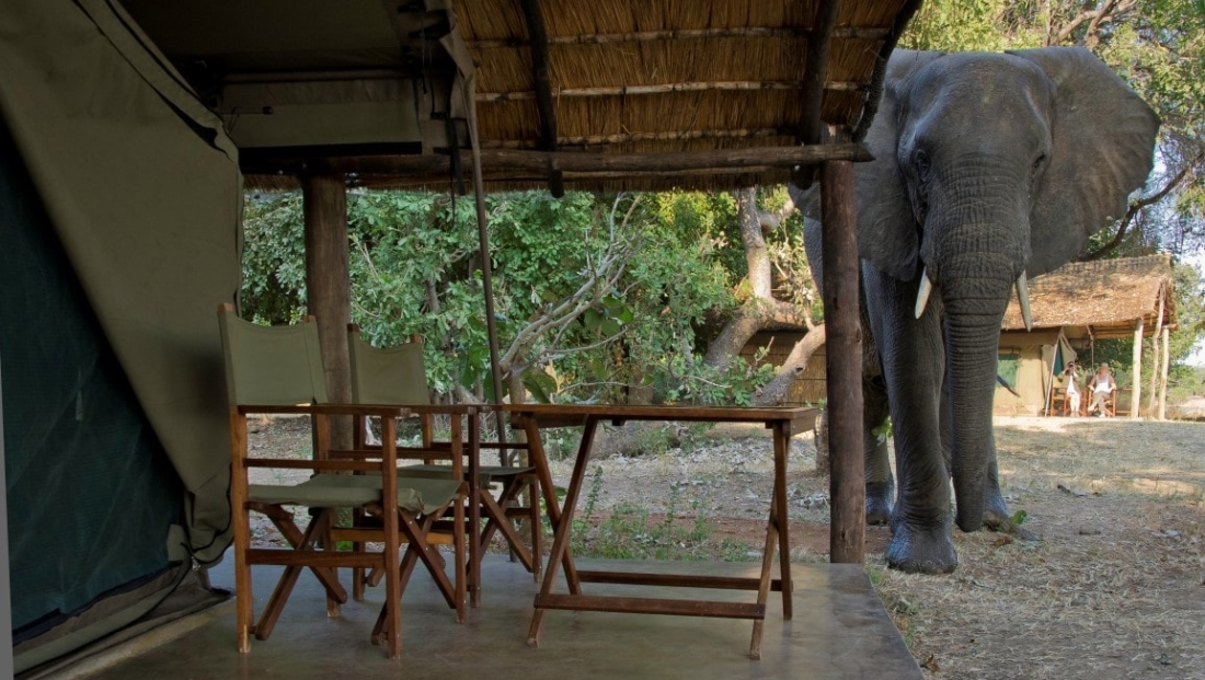 Flatdogs - olifant in het kamp