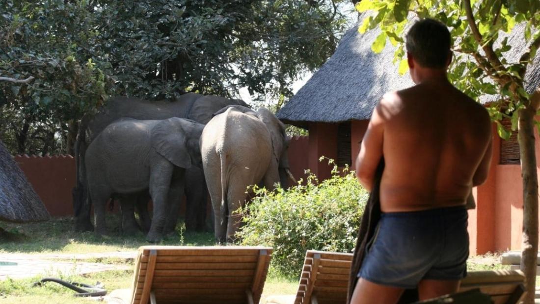 Flatdogs - olifanten in het kamp