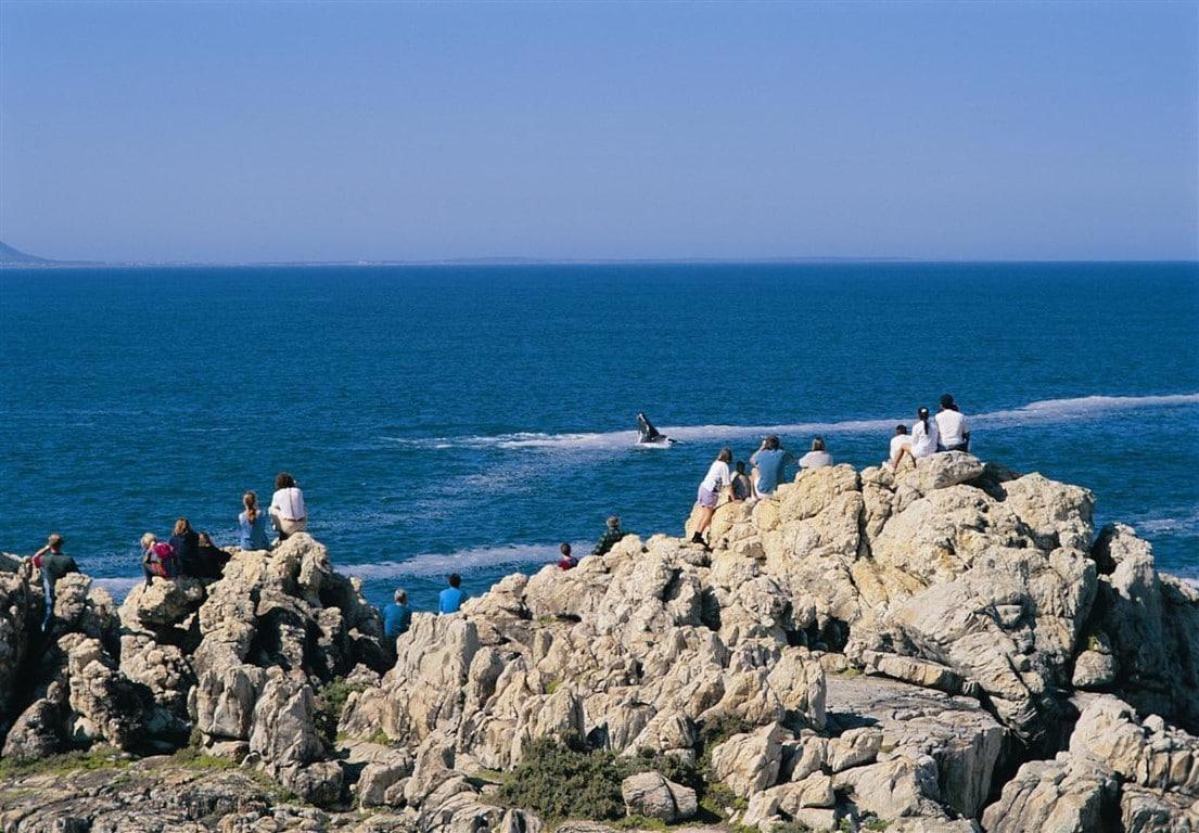 Huwelijksreizen Zuid-Afrika: In Hermanus kun je walvissen vanaf de kust zien.