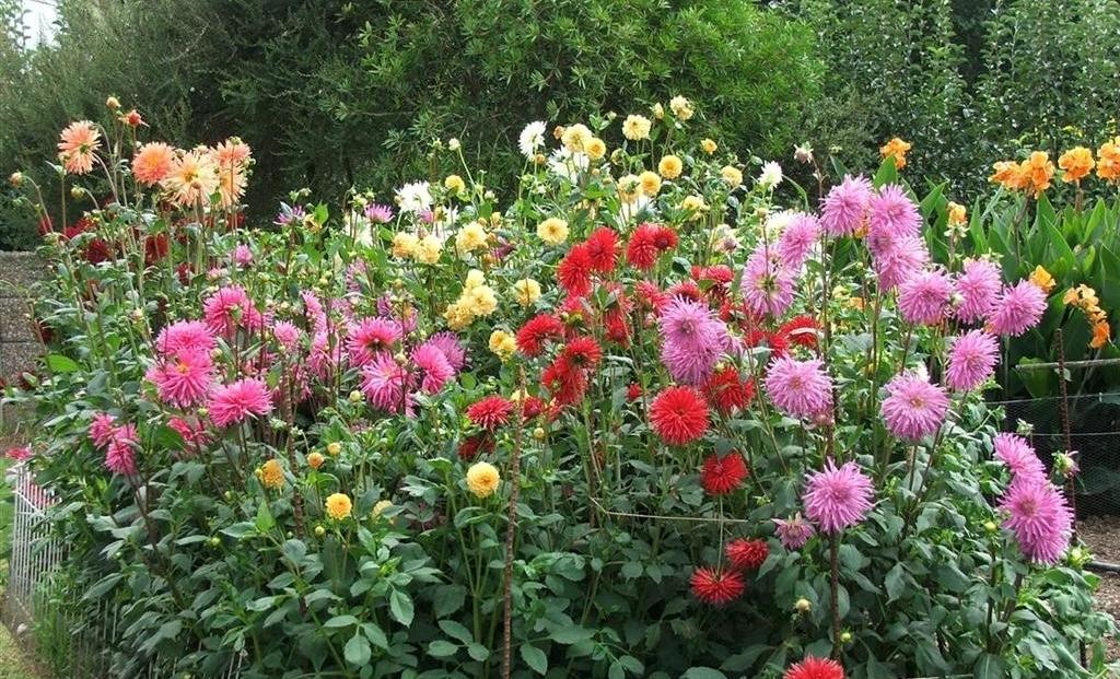 Hideaway - bloementuin