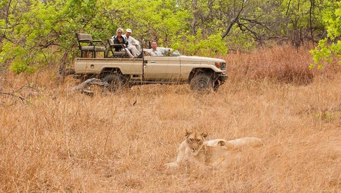 Hippo Lodge - game drive - leeuwen