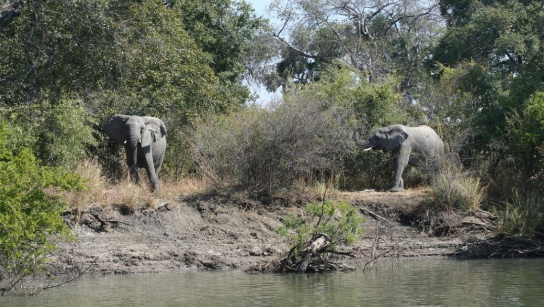 Kafue National Park - Olifanten