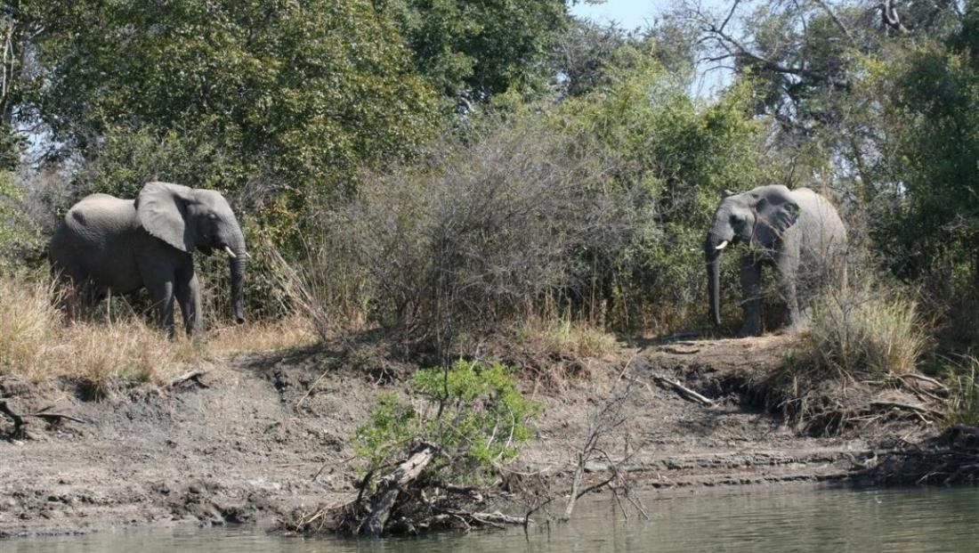 Kafue National Park - olifanten bij de rivier