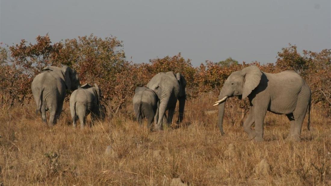 Kafue National Park - Olifanten familie