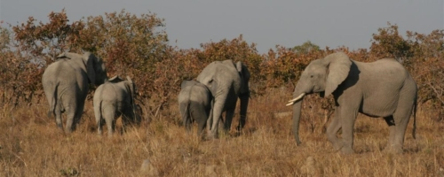 Kafue National Park (13)
