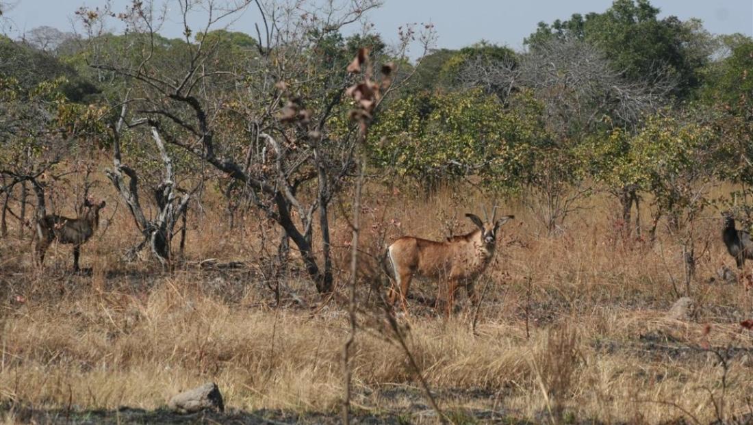 Kafue National Park -