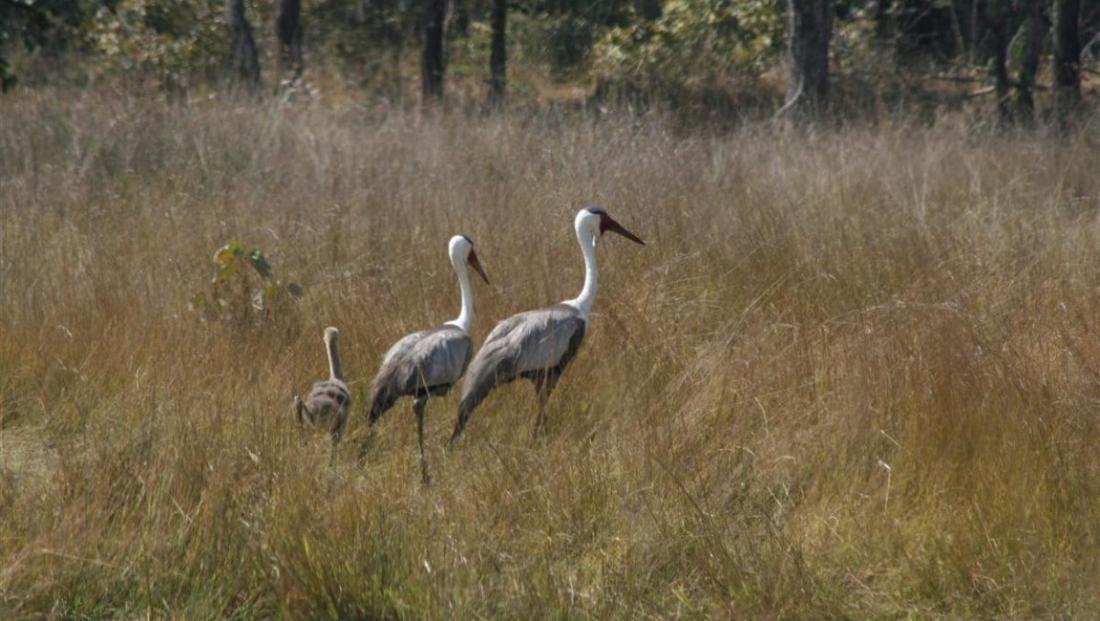 Kafue National Park - vogels