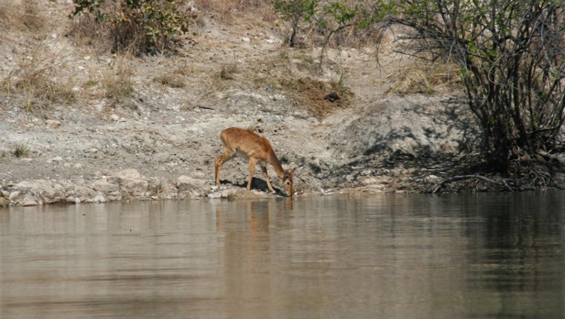 Kafue National Park (9)