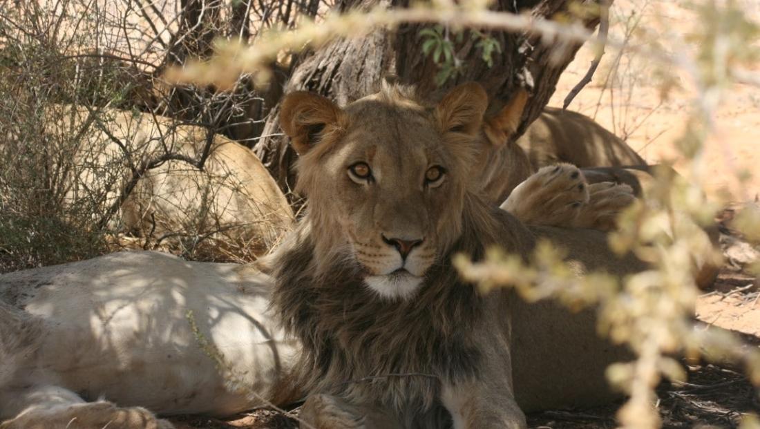 Kgalagadi Transfrontier Park (3)