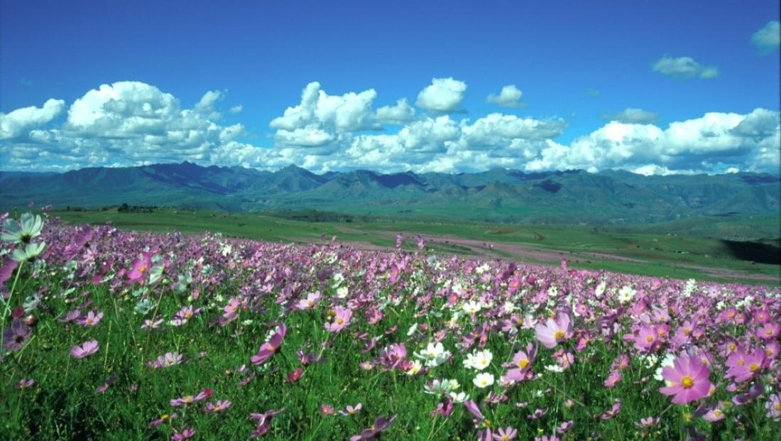 Lesotho (6)
