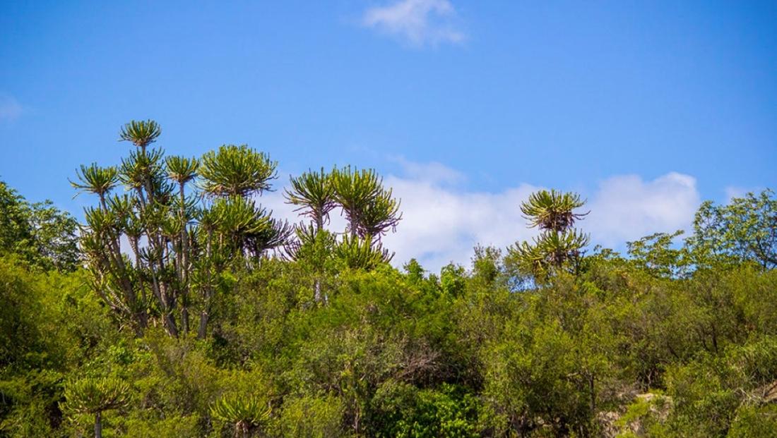 Limpopo National Park - Bush