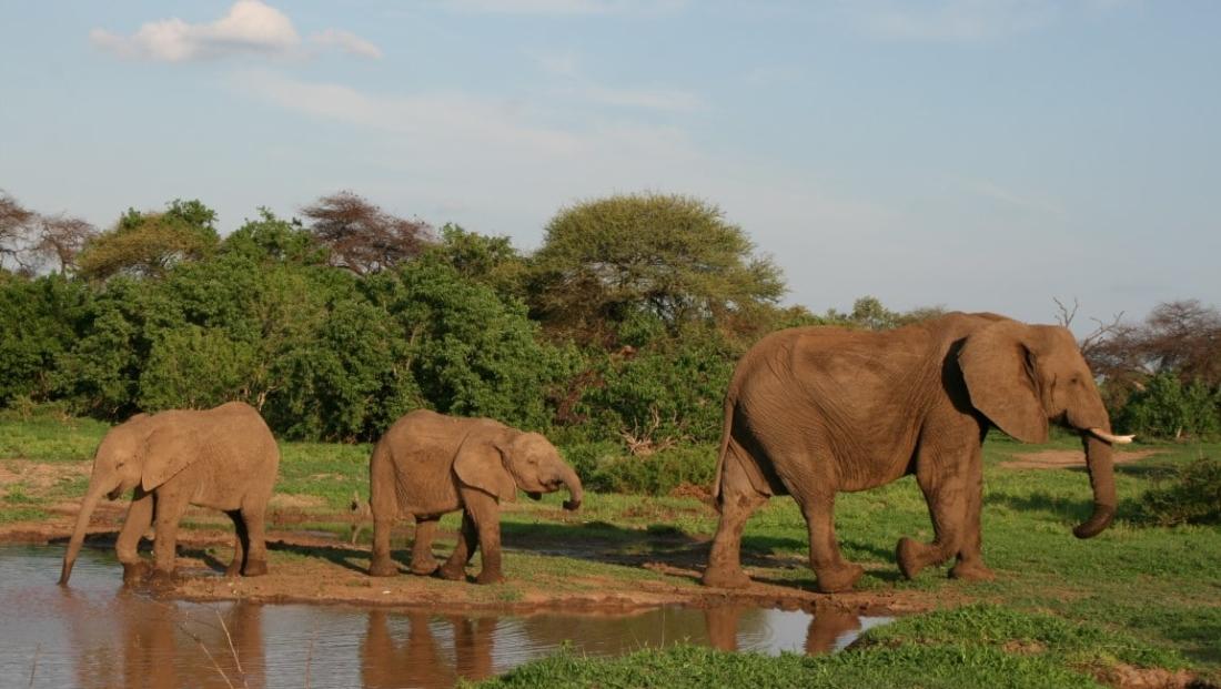 Limpopo National Park - Olifanten bij drinkplaats