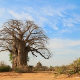 Lower Zambezi National Park (4)