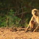 Lower Zambezi National Park (5)