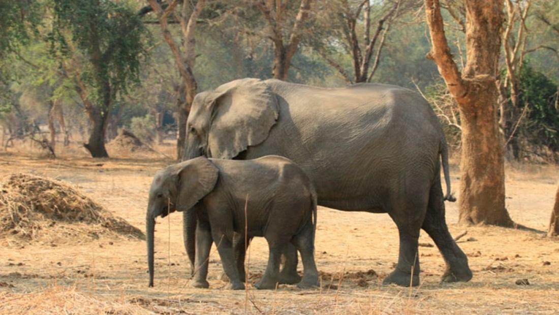 Lower Zambezi National Park (6)