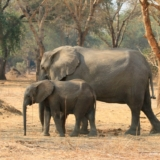Lower Zambezi National Park (6)