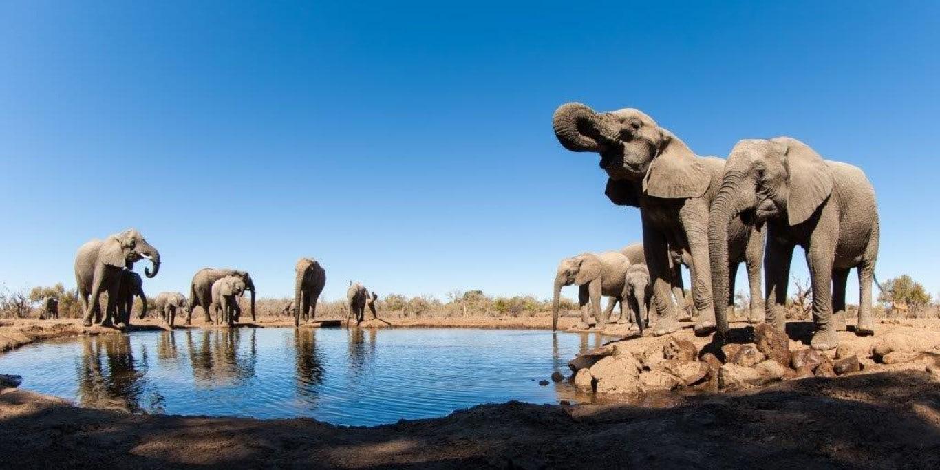 Mashatu Tent Camp - Olifanten drinken water, vanuit ondergrondse kijkhut