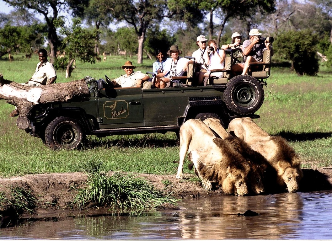 Actie & Avontuur reizen Afrika - Wildrit Nkorho bush lodge, drinkende leeuwen