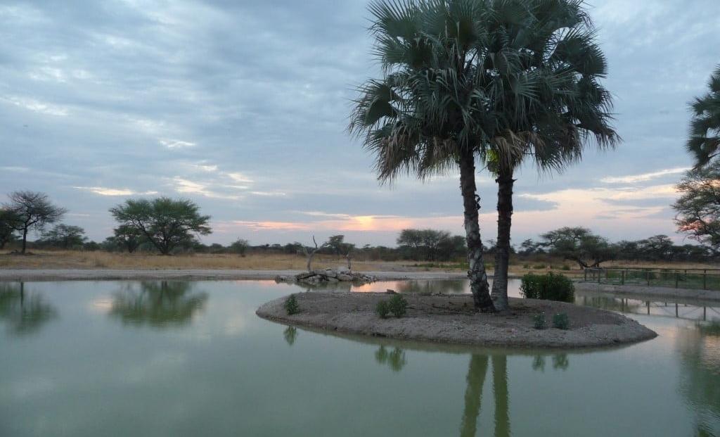 Onguma Bush Camp - drinkplaats