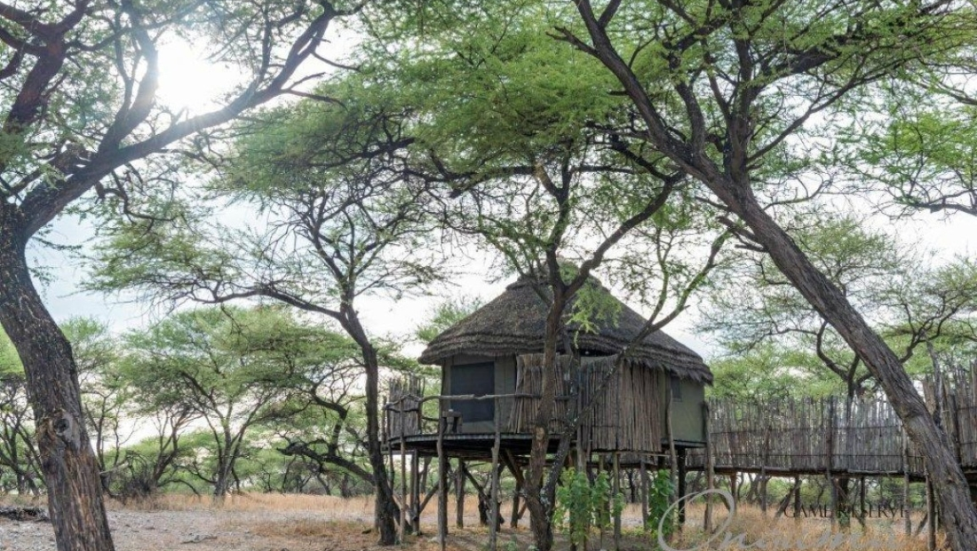 Onguma Tree Top Camp - tented chalet