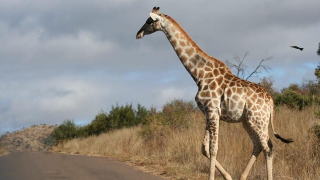 Pilanesberg NP (6)