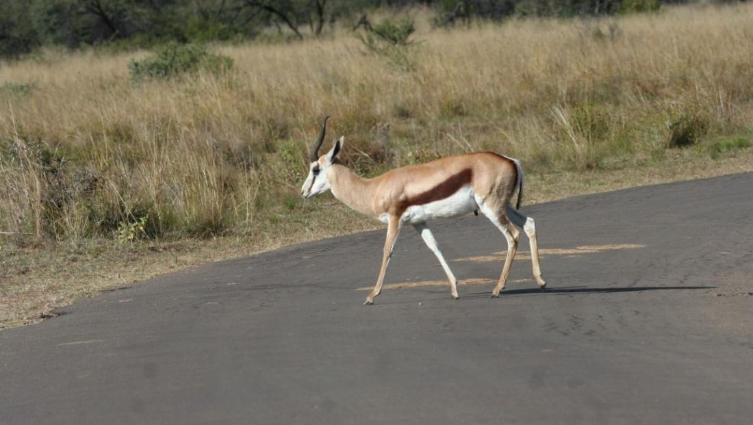 Pilanesberg NP (7)