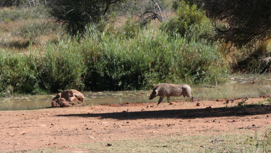 Pilanesberg NP (9)