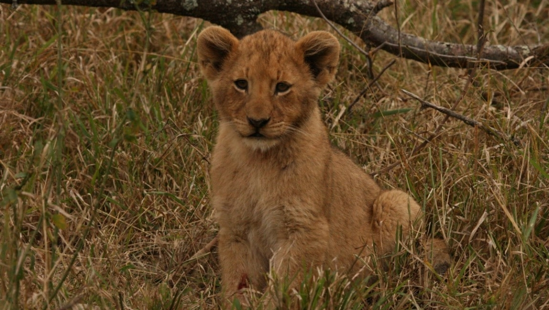 Prive Safari (11)