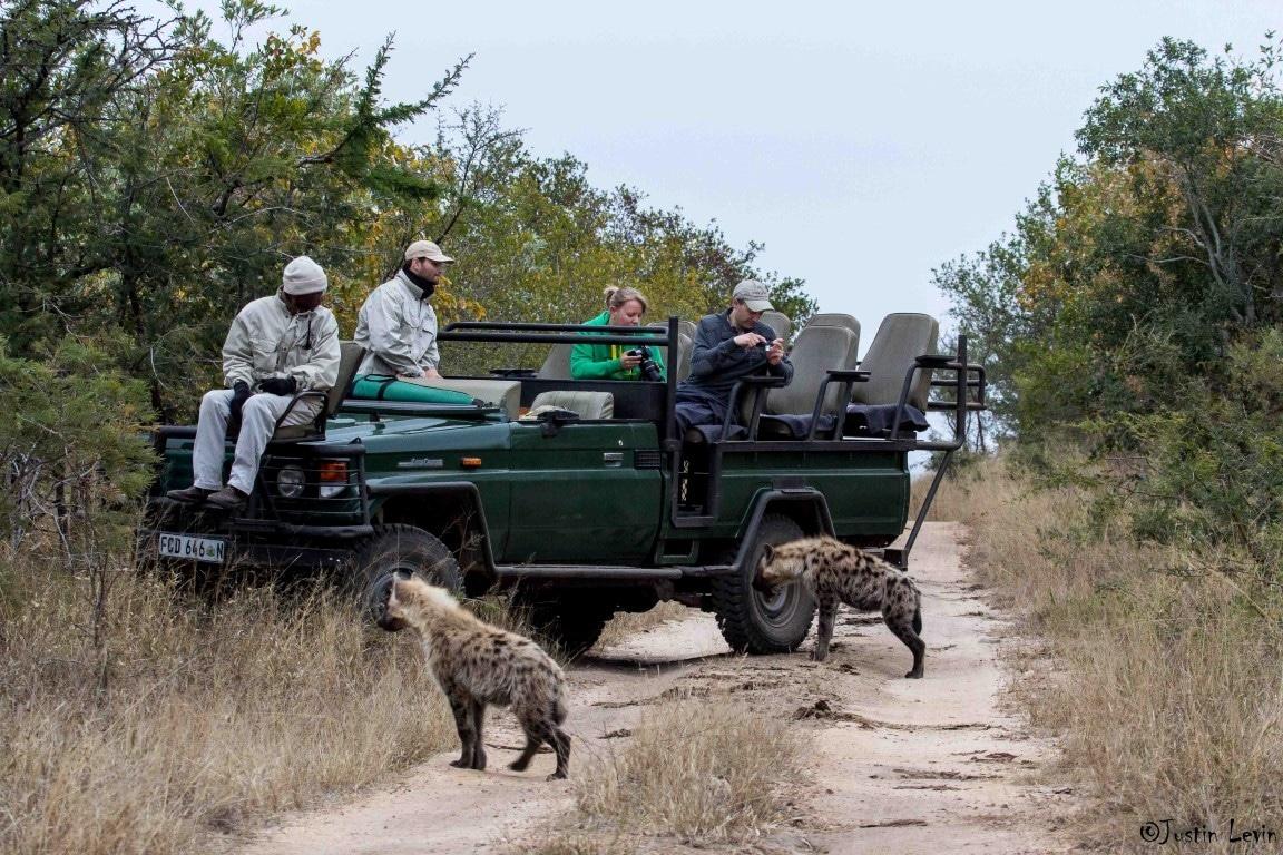 Familiereizen Afrika - Hyena's bij safari voertuig