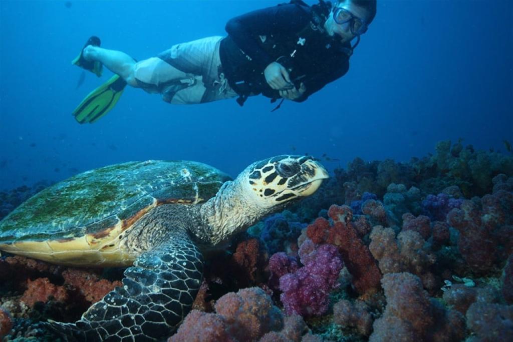 Strand Mozambique (5), duiken, koraal - Dit zijn de mooiste huwelijksreisbestemmingen in Afrika